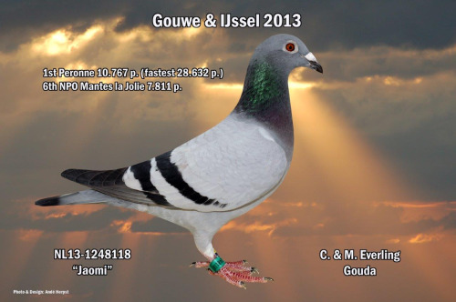 NL13-1248118