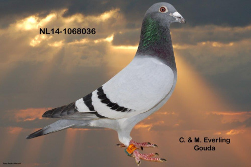 NL14-1068036