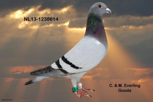 NL13-1238614
