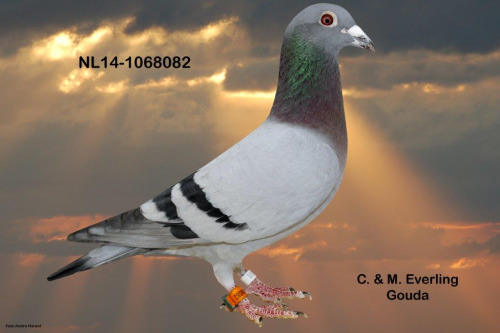 NL14-1068082