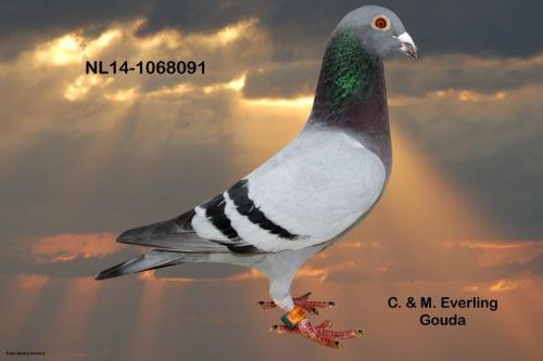 NL14-1068091