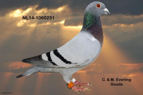 NL14-1060231