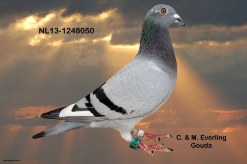 NL13-1248050
