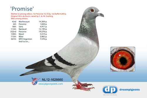 NL12-1628660
