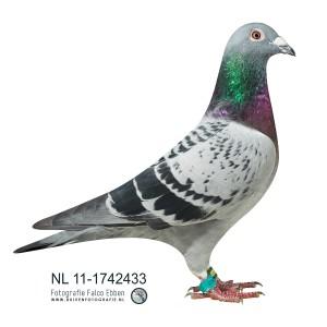 NL11-1742433-bewerkt